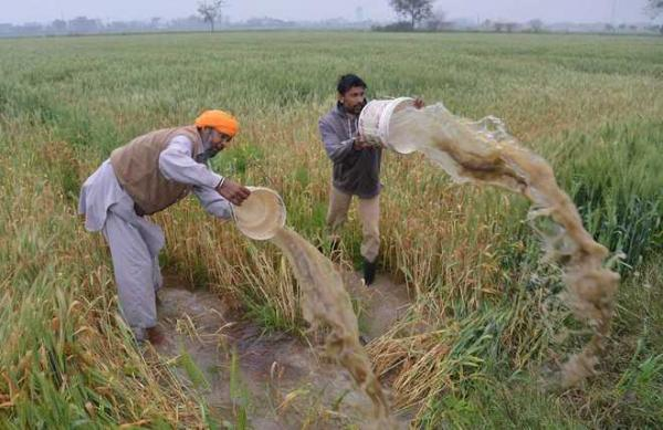 Amarinder orders special Girdawari to assess damage to crops due to rain