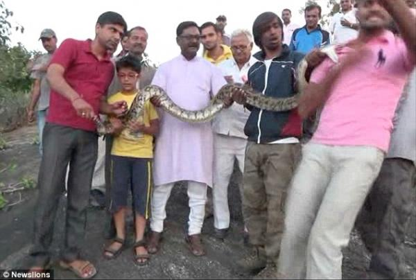 No photos please! Man tries to take selfie with python, python tries to take piece of man