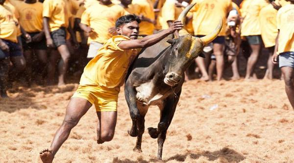Can't justify Jallikattu because it is 5000 years old: Supreme Court