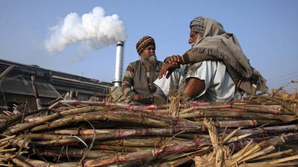 To woo sugarcane farmers, Govt may announce Rs 7000 crore bailout package