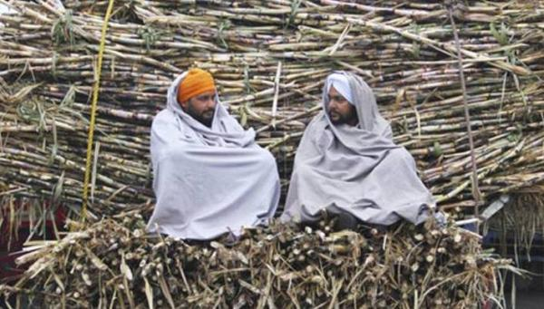 Punjab to provide subsidy of Rs 25 per quintal to sugarcane farmers